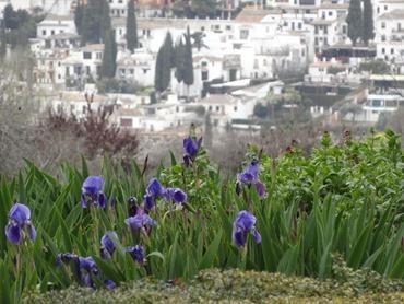 206. Alhambra, Granada