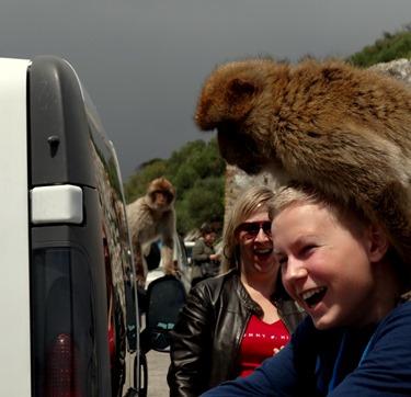 56a. Gibralter Ape on girl's back