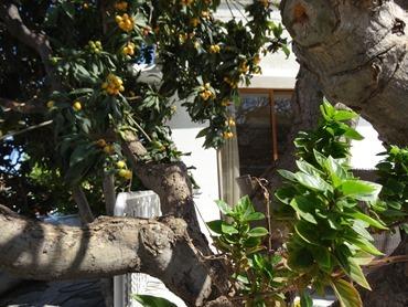 6. Larnaka