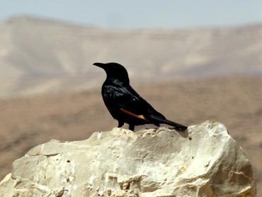 90. Masada