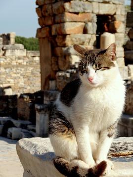 48. Ephesus