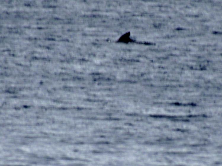 01.  At Sea 7-18-2014