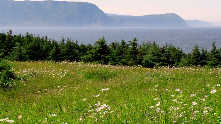 035.  Corner Brook, Newfoundland (Grand Morne Park) 7-15-2014035.  Corner Brook, Newfoundland 7-15-2014