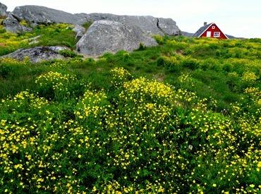117.  Nanortalik, Greenland 7-19-2014