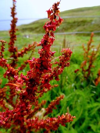 013.  Lerwick, Shetland Islands