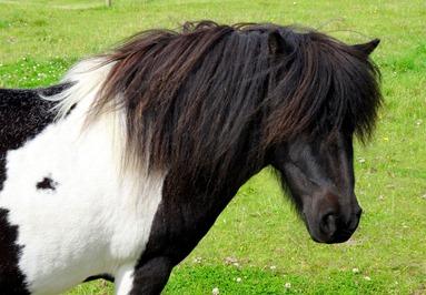 056.  Lerwick, Shetland Islands