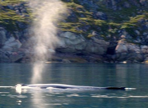 071a. Qaqortoq, Greenland