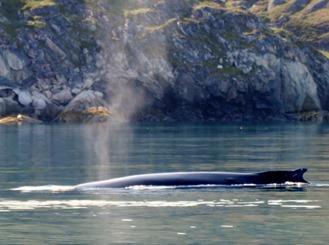 072a. Qaqortoq, Greenland