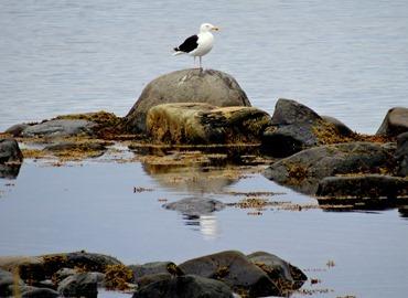 091. St. Andrews, Newfoundland