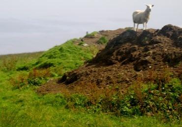 104.  Lerwick, Shetland Islands