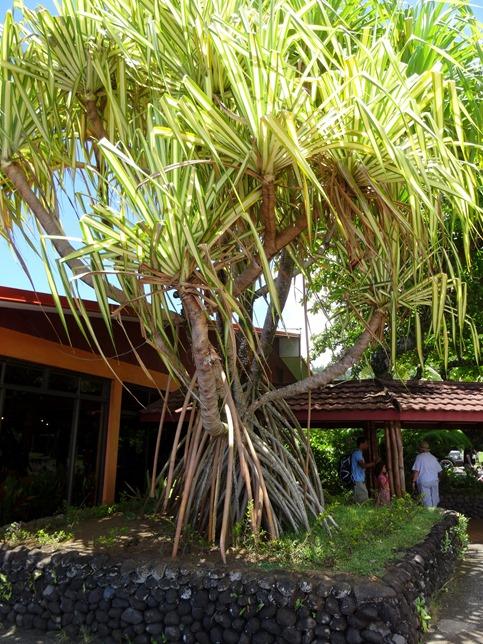 103. Papeete, Tahiti