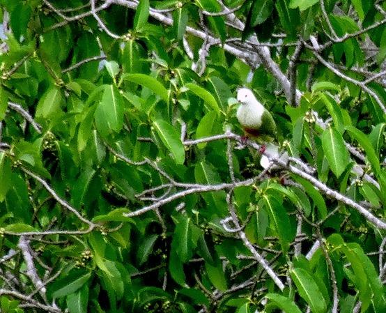 108. Nuku Hiva, Marquesa Islands