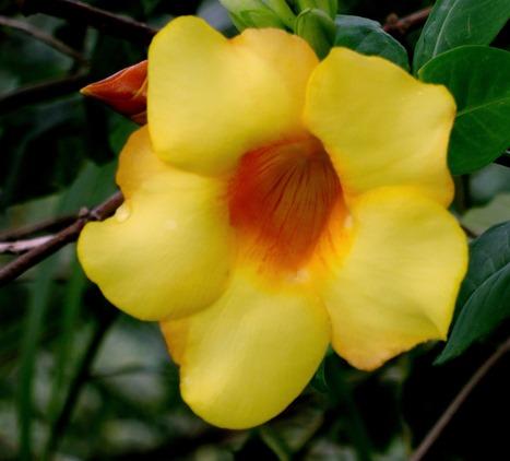 132. Nuku Hiva, Marquesa Islands