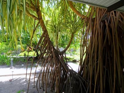 132. Papeete, Tahiti