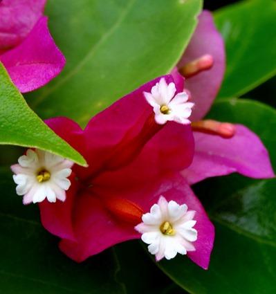 135. Nuku Hiva, Marquesa Islands