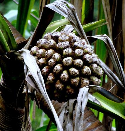 136. Nuku Hiva, Marquesa Islands