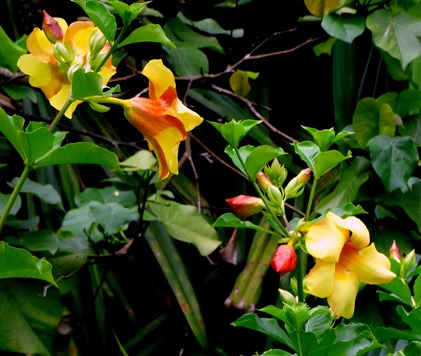 137a. Nuku Hiva, Marquesa Islands