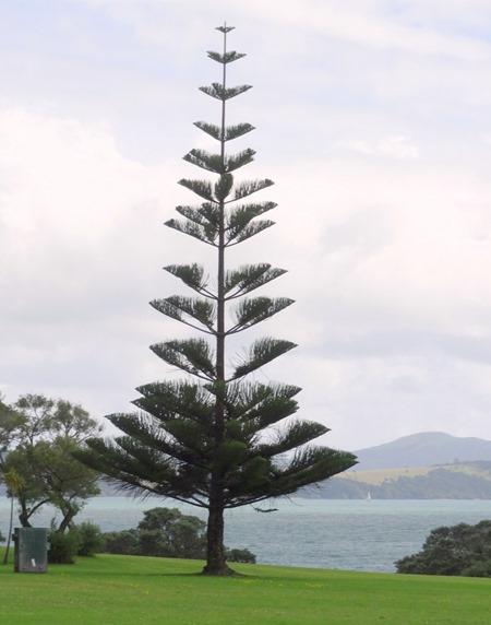 140. Waitangi, New Zealand