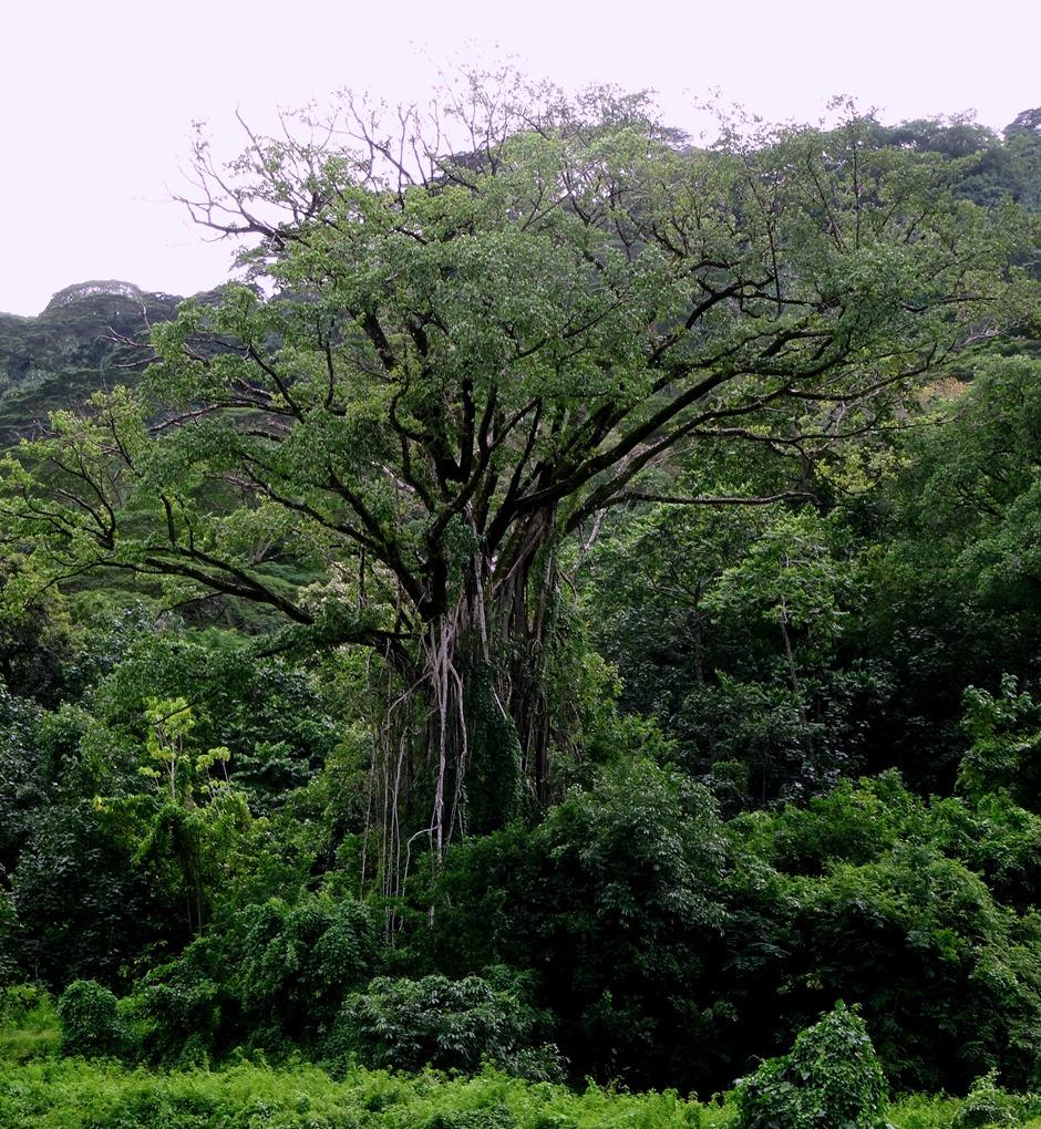 145. Nuku Hiva, Marquesa Islands
