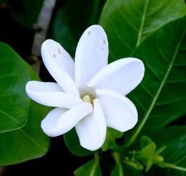 171. Nuku Hiva, Marquesa Islands