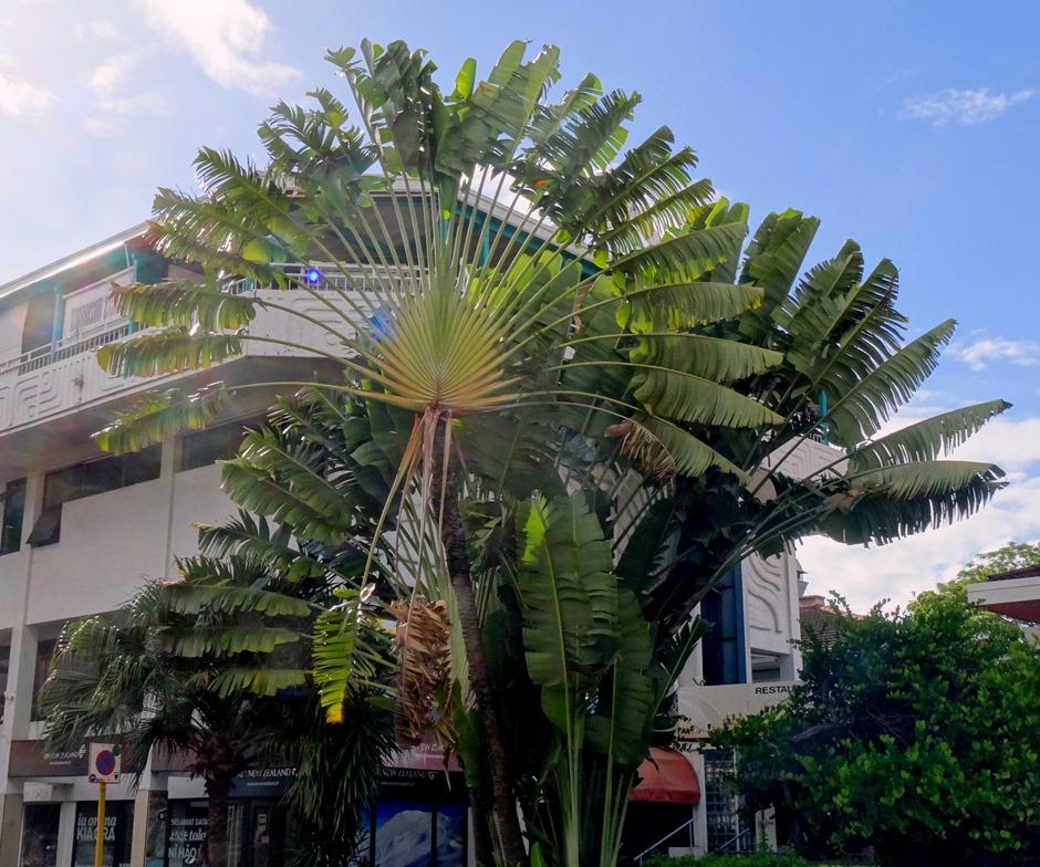 172. Papeete, Tahiti