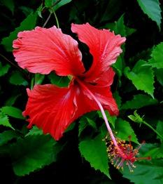 186. Nuku Hiva, Marquesa Islands