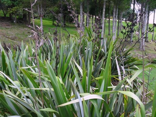 191. Waitangi, New Zealand