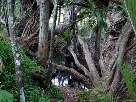 207. Waitangi, New Zealand