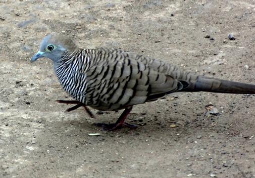 245. Nuku Hiva, Marquesa Islands