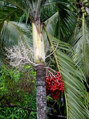 251. Nuku Hiva, Marquesa Islands