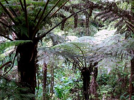 255. Waitangi, New Zealand