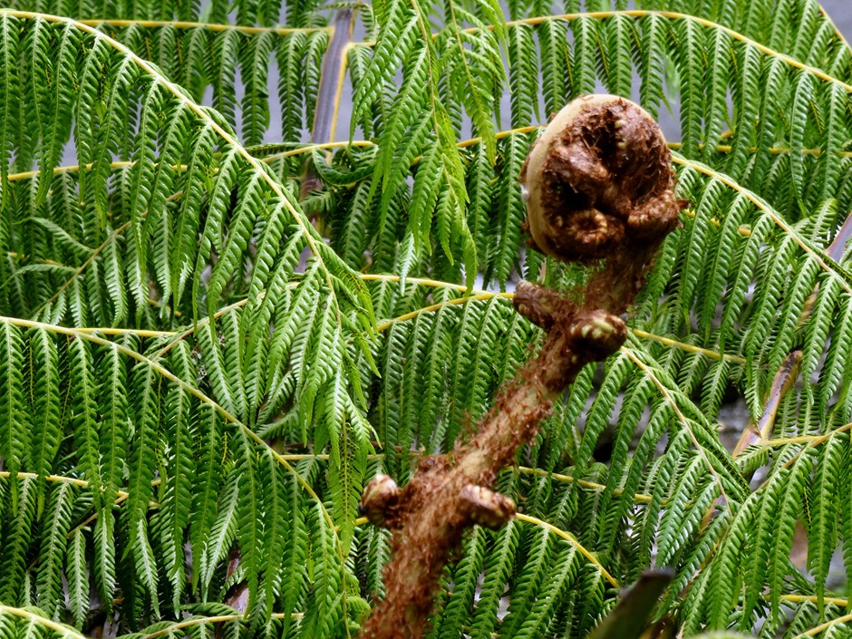 260. Waitangi, New Zealand
