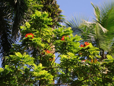 61. Puerto Limon, Costa Rica