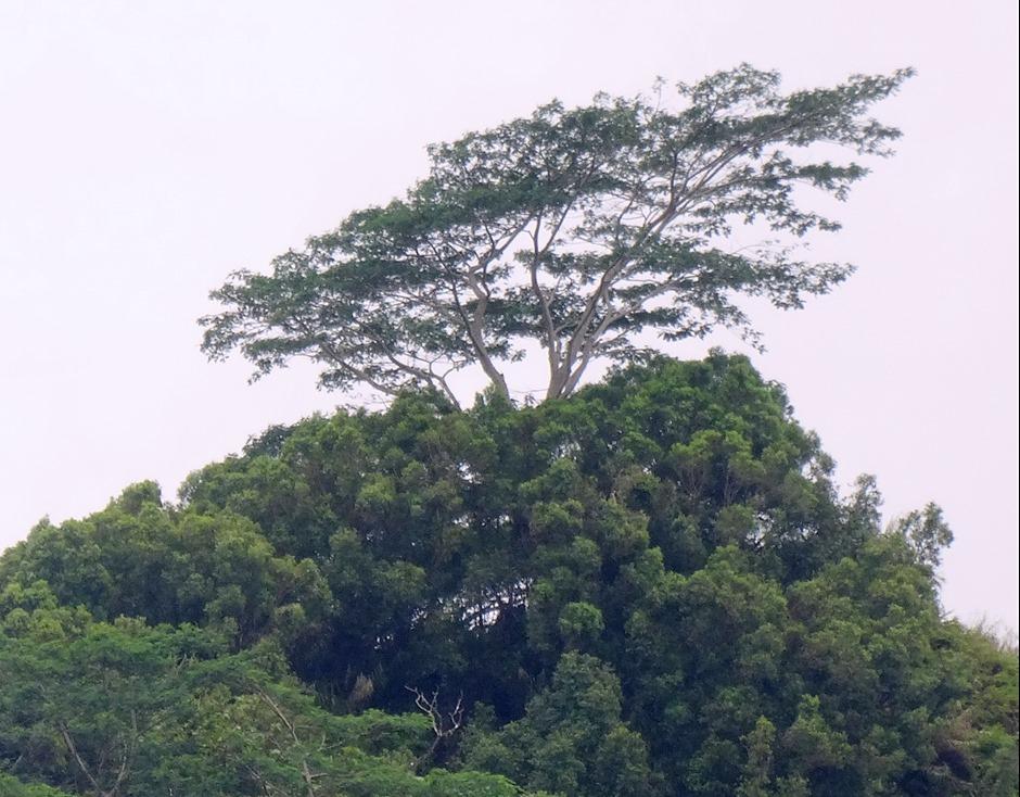 81. Nuku Hiva, Marquesa Islands