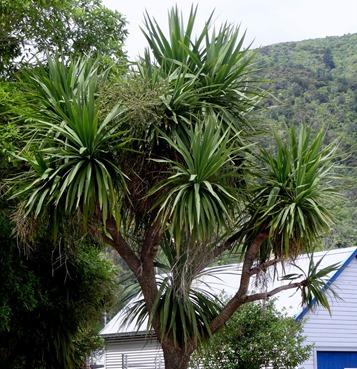 86. Picton, New Zealand