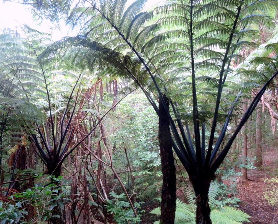 92. Waitangi, New Zealand