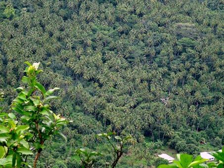 93. Nuku Hiva, Marquesa Islands