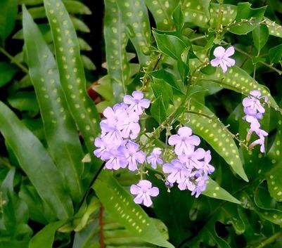 97. Nuku Hiva, Marquesa Islands