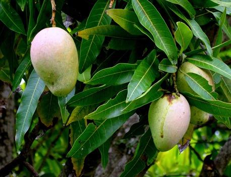 98. Nuku Hiva, Marquesa Islands