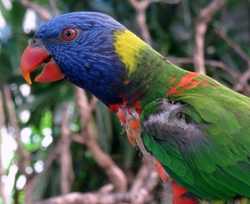 107. Cairns, Australia