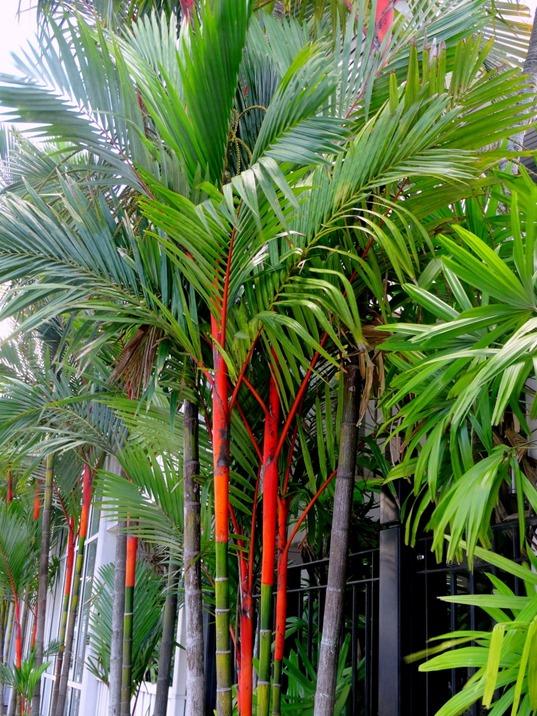 169. Cairns, Australia