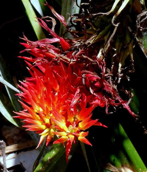 194. Cairns, Australia