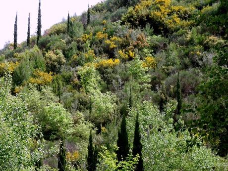 108. Katakalon, Greece (Olympus)DSC00942