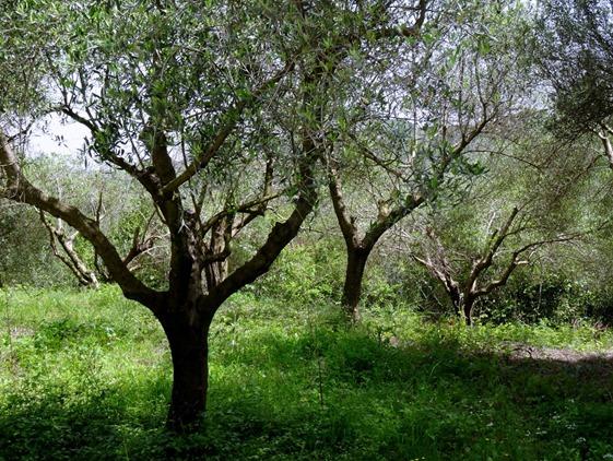 112. Katakalon, Greece (Olympus)DSC00946