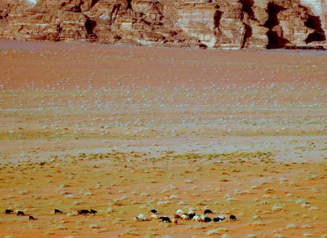 234. al-Aqaba, Jordan (Petra & Wadi Rum)