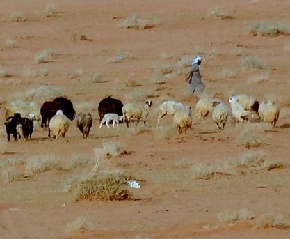 259. al-Aqaba, Jordan (Petra & Wadi Rum)