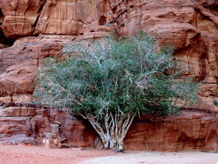 277. al-Aqaba, Jordan (Petra & Wadi Rum)
