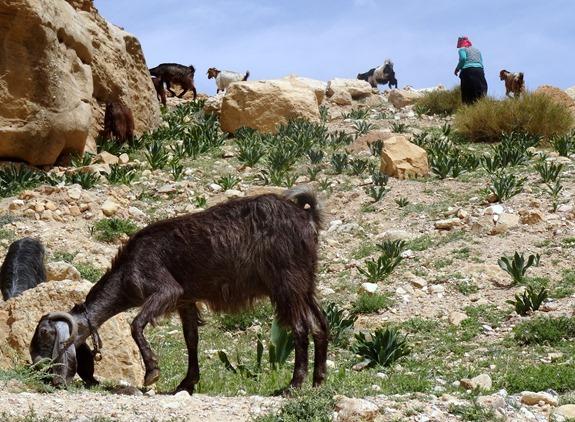 68. al-Aqaba, Jordan (Petra & Wadi Rum)