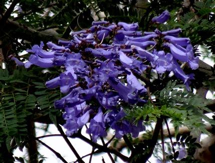 118 Funchal, Madeira