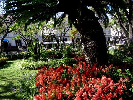 19. Funchal, Madeira